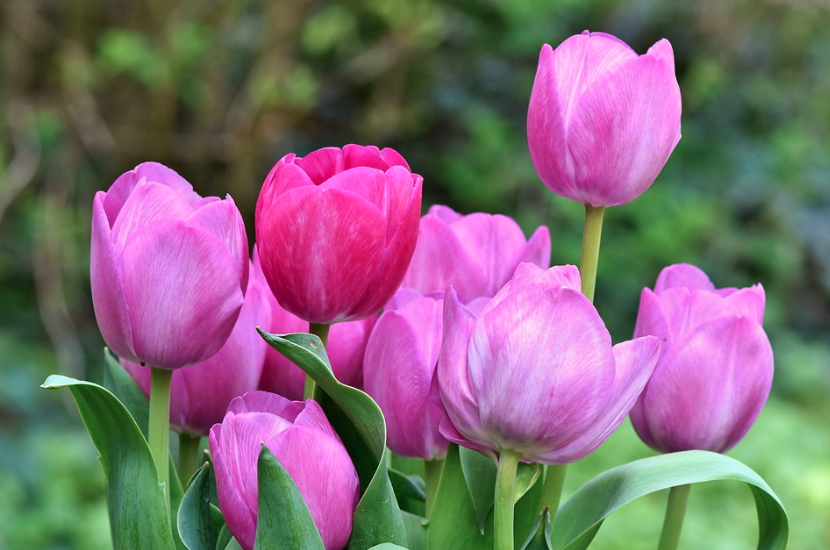 Three Ways You Can Help Welcome Spring Into Your Home
