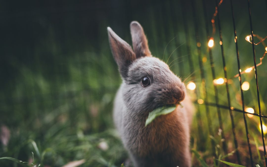 Best Pets for the Rural Dallas Life